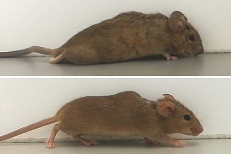 This is a before and after image of the mouse
