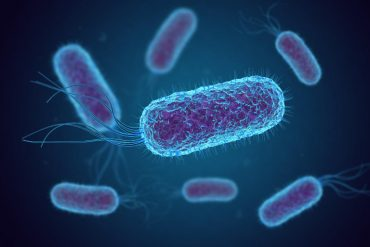 This shows E. coli bacteria