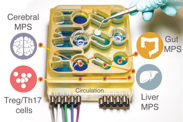 This shows the organ on a chip platform
