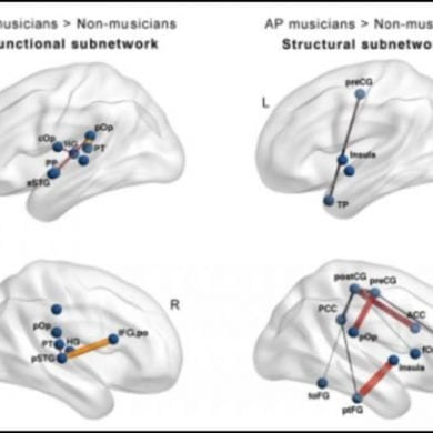 This shows the different brain networks on drawings of the brain
