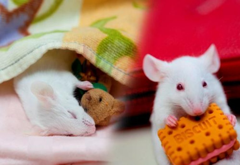 This shows a sleeping mouse snuggling a tiny teddy and a mouse eating a cheese cracker