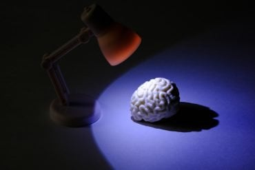 This shows a brain model under a desk lamp