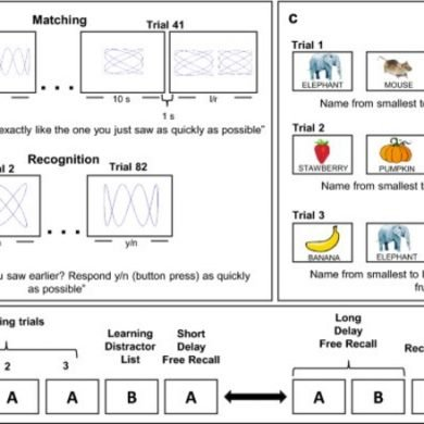 This shows images from the memory test used in this study