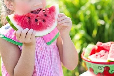 This shows a little girl lifting a piece of watermelon to her lips