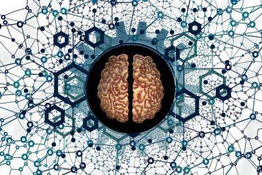 This shows a brain split in half