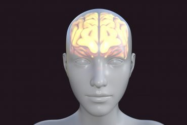 This shows a model of a head with a model of a brain inside