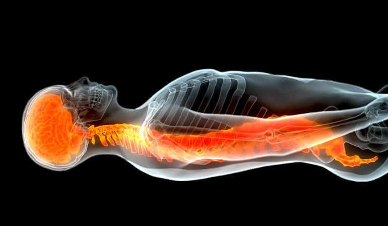 This shows the outline of a body with the spinal cord highlighted in orange