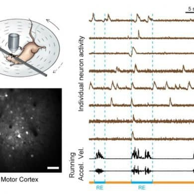 This shows a drawing of a mouse on a wheel and a print out of brain waves