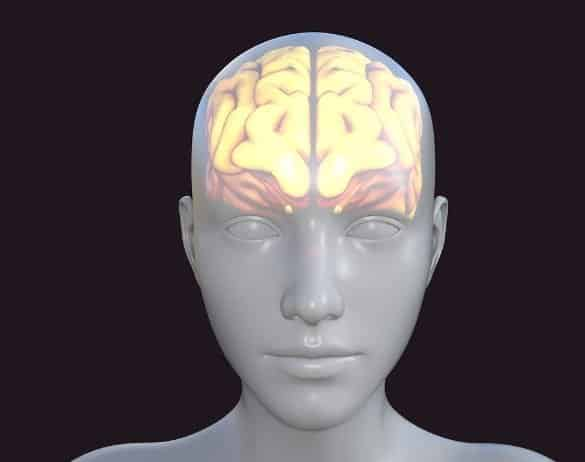 This shows a model of a head and a brain