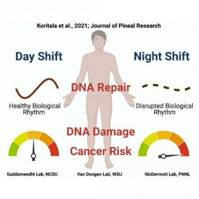 This diagram shows how night shift alters dna and increases cancer risk