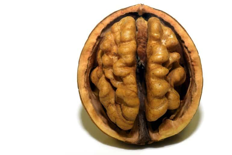 This walnut looks like a brain