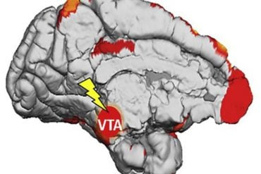 This shows the brain with the VTA highlighted