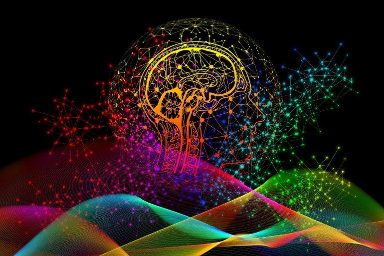 Esto muestra el contorno de un cerebro.