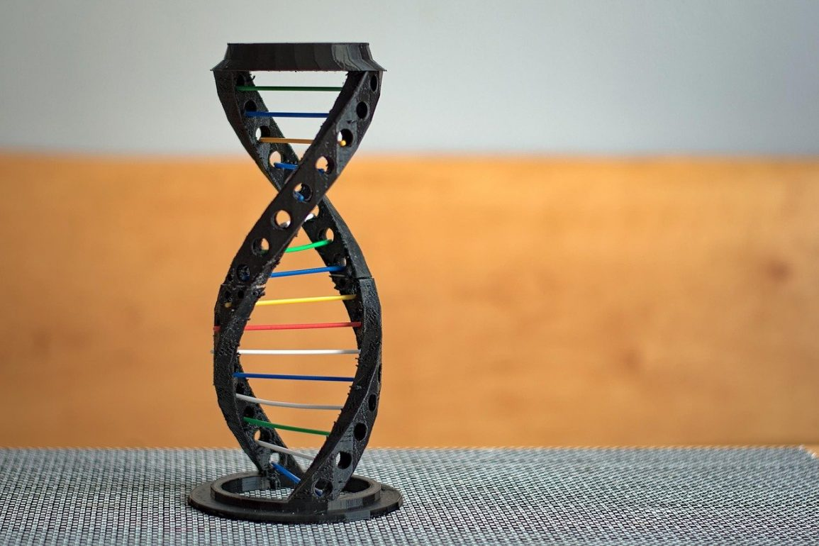 This shows a dna strand model