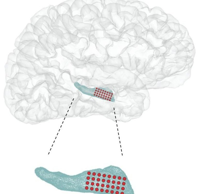 This shows the location of the hippocampus in the brain