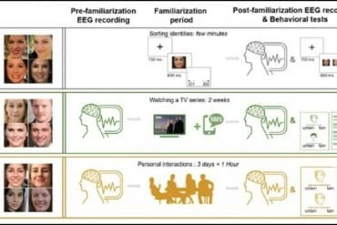 This is a diagram from the study