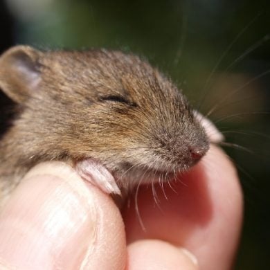 This shows a cute little mouse
