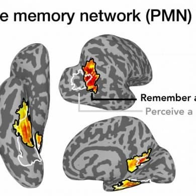 This shows different areas of the brain highlighted where the memories occur