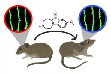 This shows two mice and a stick and ball chemical structure
