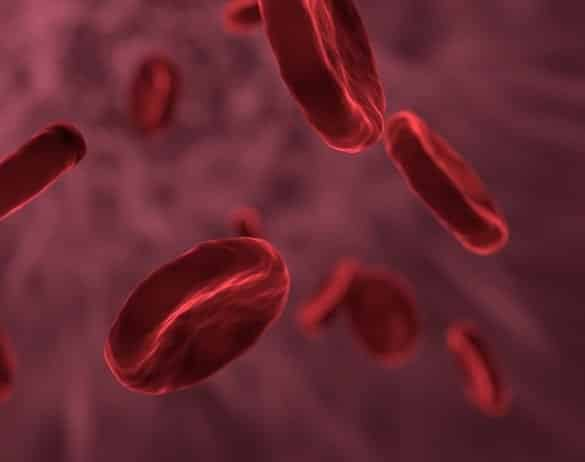 This shows red blood cells