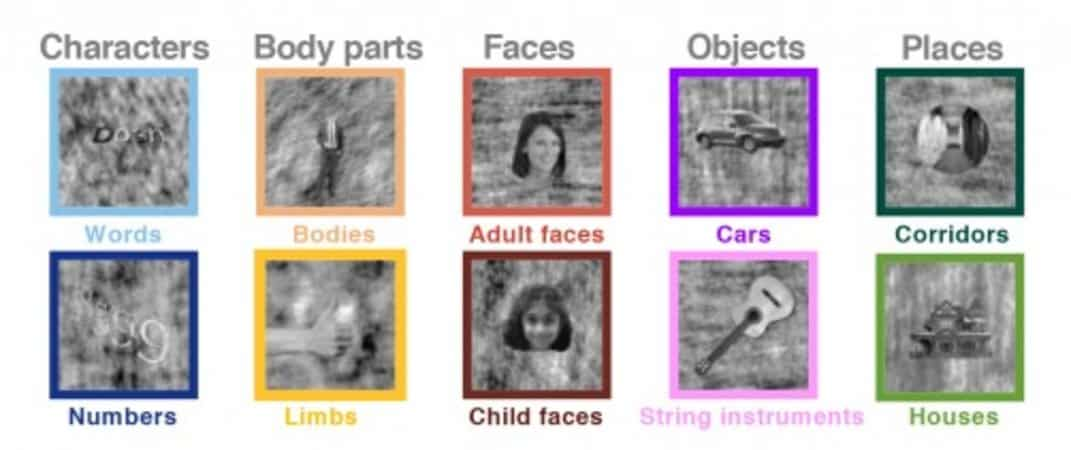 This shows different images the children had to learn