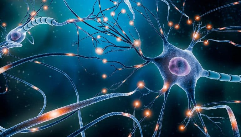 This is an illustration of neurons
