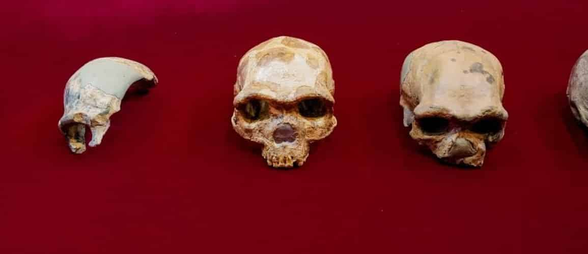 This shows a collection of skulls