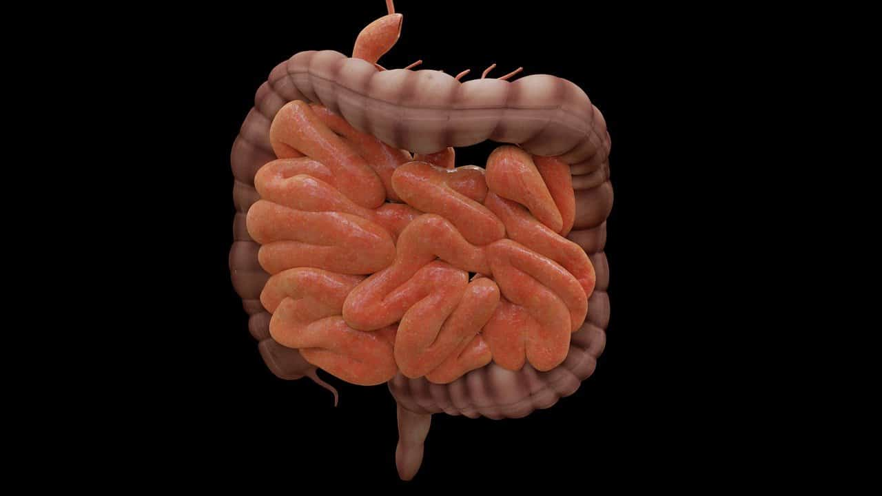 This is a drawing of the intestines