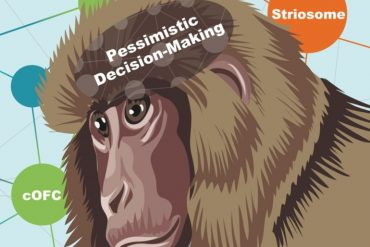 This is a cartoon of a monkey