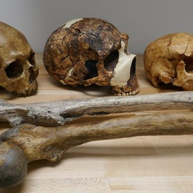 This shows skulls and bones