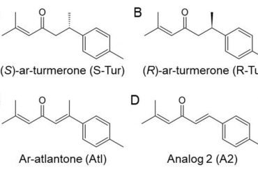 This shows the chemical structures of the four different molecules