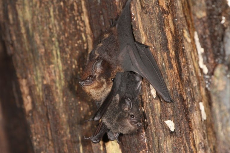 This shows a mother and baby bat