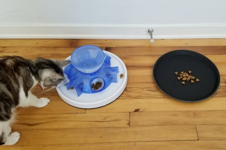 This shows a cat eating from a bowl