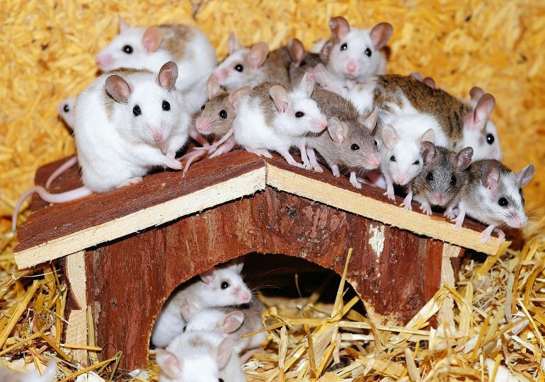 This shows a lot of mice