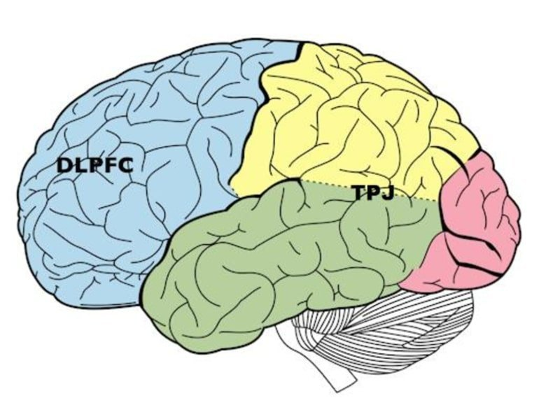 This shows the location of the tpj and dlpfc in the brain