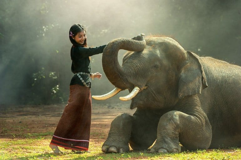 This shows a lady petting an elephant's trunk