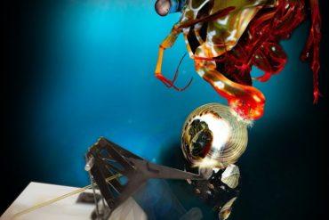 This shows a mantis shrimp and the robot