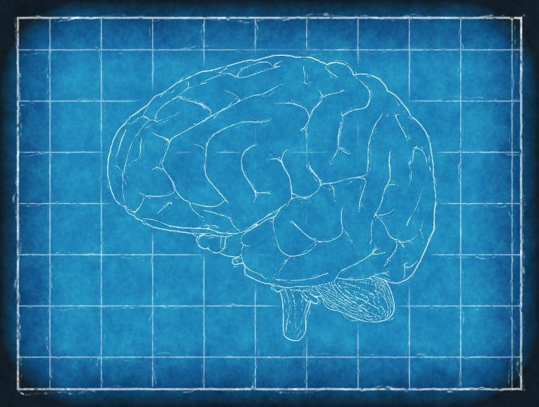 This shows a brain blueprint