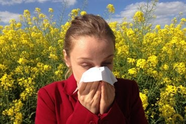 This shows a woman sneezing into a tissue in a field of yellow flowers