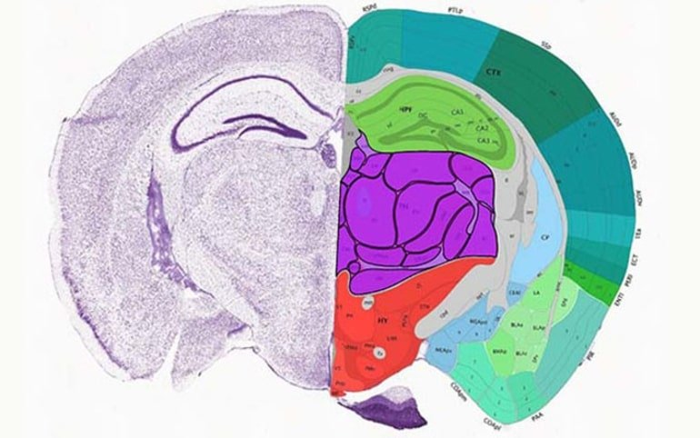 One half of this image shows a mouse brain slice, the other shows the areas mapped in detail
