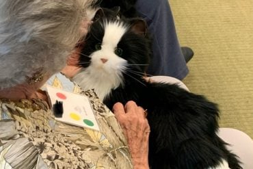 This shows an older lady with a robotic cat