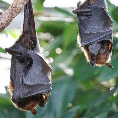 This shows two bats
