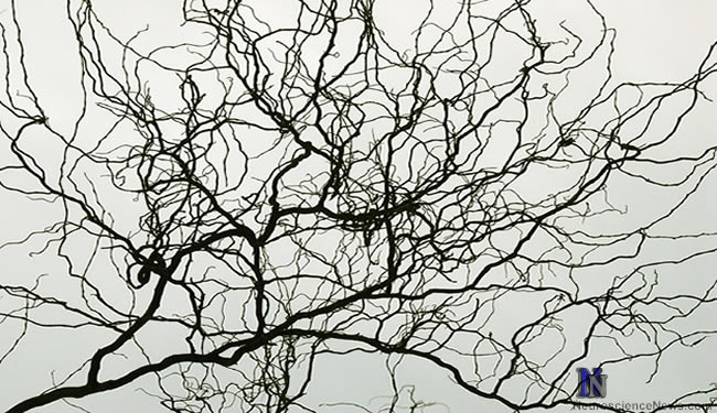A drawing resembling a neuron is shown.