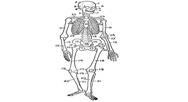 Brain Mapping Skeleton