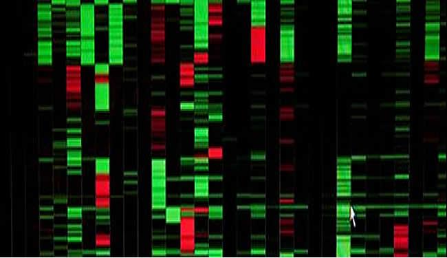 LIN28 OLIG2 Genetic Markers