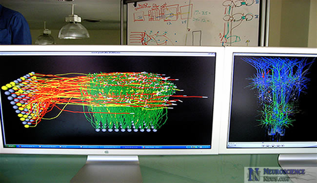 Computational Neuroscience MS Findings