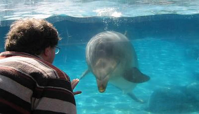 Tim Leighton is looking at a dolphin in a tank. The dolphin has bubbles above the head.
