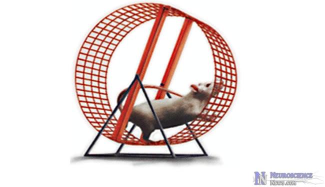 Engineered Mice Run Twice as Long on Treadmill