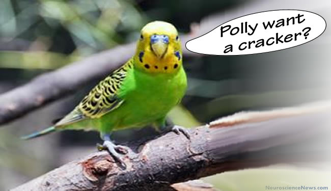 """Altered picture of Melopsittacus undulatus with a speech bubble saying """"Polly want a cracker?"""" next to it."""